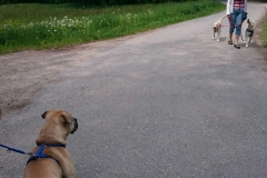 entspannte Hundebegegnung