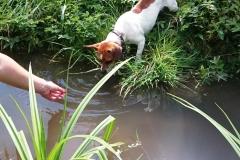 Pepe - mit einer Pfote im Wasser ;-)