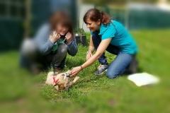 einmal den Herzschlag des eigenen Hundes hören. In unserer Welpenschule.