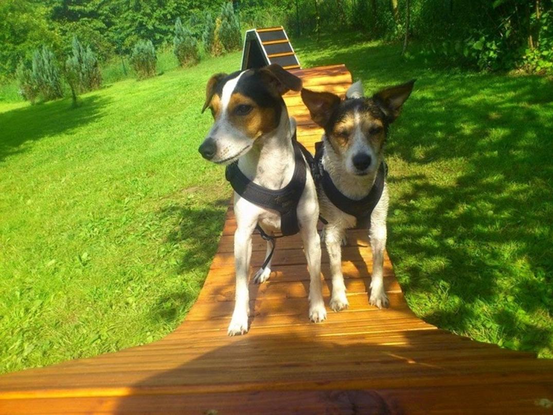 Sally & Zazou auf der Hängebrücke