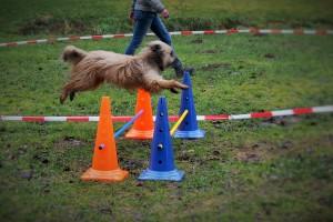 Basti - Longier-Profi beim Sprung