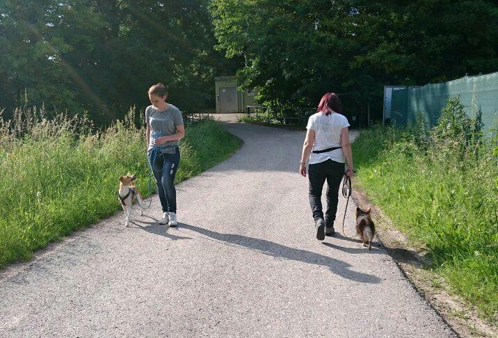 Hundebegegnung-06-2016